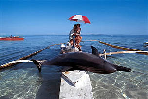 Caught dolphin on fishing boat, Pamilacan Island, Philippines. / &copy;: WWF-Canon / Jrgen FREUND