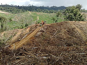 Logging highway opened by APP an partners will split in half one of Indonesias most important forests.