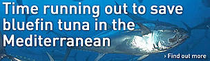 Time running out to save bluefin tuna in the Mediterranean / ©: M. San Felix