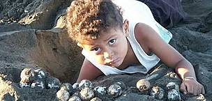 A child helps collecting olive ridley turtle (&lt;i&gt;Lepidochelys olivacea&lt;/i&gt;) eggs, ... / &copy;: WWF-Canon / Carlos DREWS