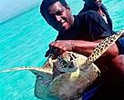 Fishermen take a Hawksbill turtle in Fiji.