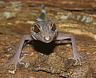 Among 163 new species discovered in the Greater Mekong region last year are at risk of extinction due to climate change.