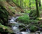 Ukraine includes some of the most valuable natural areas in the Carpathian Mountains.