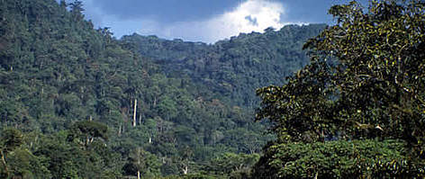 Bwindi Impenetrable Forest. NP Buhoma. Uganda.  rel=