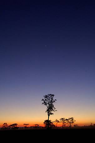 The sun rising at Guarayos, Santa Cruz, Bolivia, where the tree for Un Árbol was felled in May 2006 / ©: WWF / Andrés UNTERLADSTAETTER