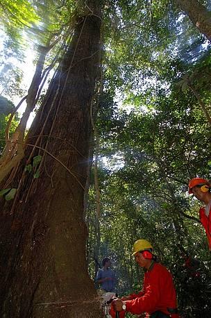 / ©: WWF / Andrés UNTERLADSTAETTER