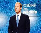 เจ้าชายวิลเลี่ยม ดยุกแห่งเคมบริดจ์ทรงเป็นประธานในการจัดกิจกรรมเปิดตัวกิจกรรมขององค์กร United for Wildlife