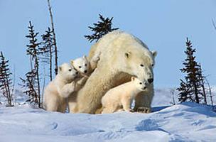 / ©: David Jenkins/Canon WWF