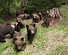 Ursuleți la Centrul URSUS Pentru Reabilitarea Urșilor Orfani