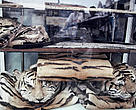 Tiger skins and other rare cats are openly displayed for sale in Cholon District, Ho Chi Minh City, Vietnam.