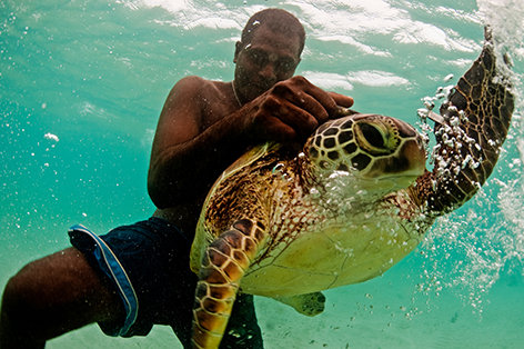 A volunteer ranger catching sea turtles for tagging on Tetepare Island, Solomon Islands. © James Morgan / WWF