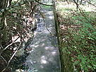 A stream running through a forest / ©: Iren Ilieva