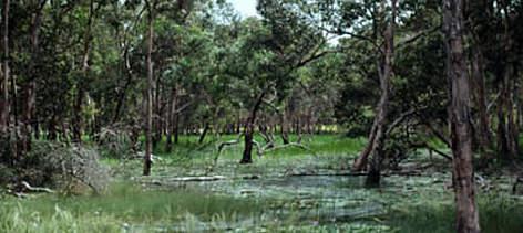 Wwf Protected Areas Establishment In New Guinea