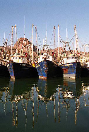 Shrimp fleet in harbour.  Gulf of California, Mexico. / &copy;: Gustavo Ybarra / WWF-Canon