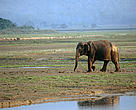 Asian elephant (Elephas maximus), Royal Chitwan National Park, Terai Arc, Nepal.