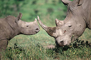 Donate to Rhinos