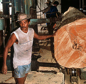 Mahogany tree trunk being sawn into planks. / &copy;: Mark Edwards / WWF-Canon