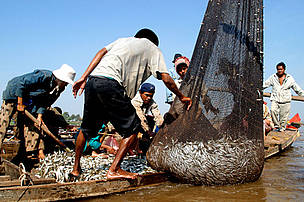 Fishermen unload their catch in the Tonle Sap River in Cambodia. Fisheries are critical for sustaining livelihoods throughout the Mekong Basin. 