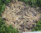 Deforestación del Amazona