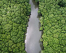 Aerial view of mangrove forest, divided by the Nandamojo River, Junquillal beach, Pacific coast of Costa Rica.