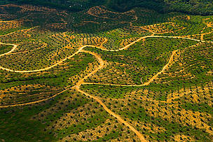 Aerial view of palm oil plantation on deforested land, Sabah, Borneo, Malaysia / ©: naturepl.com/Juan Carlos Munoz / WWF