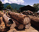 Mozambique and Tanzania export more than 50% of their timber to China. Chinese sawmill in Tanzania's  Udzungwa Mountains.