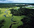 El nuevo código forestal amenaza la protección de los bosques de la Amazonía.
