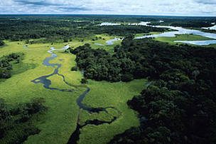 Aerial view of flooded forest during rainy season with floating plants, Rio Negro Forest Reserve, Amazonas, Brazil.