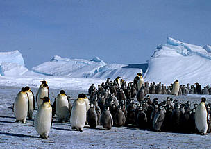 / ©: Fritz PÖLKING / WWF