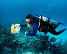 WWF researcher monitoring coral reef