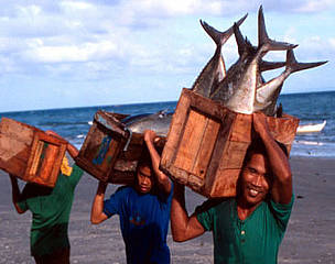 Local fishermen with tuna catch Sulu Sea, Philippines