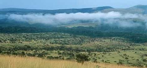 "View of Mpassa project area, Gabon. Project: ""Protection des Gorilles"", Gabon and Congo.  rel="