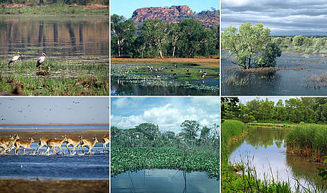 Global wetlands montage. rel=