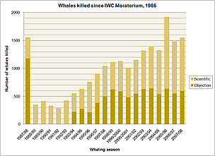 Whales killed since IWC moratorium. 1986 - 2008. / ©: WWF
