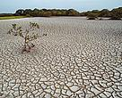 Severe droughts might double in South-Asia over the coming years.