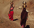 Maldhari women carrying water near Sasan Gir Gujarat, India.