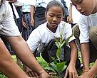 Teachers and students in Phathoumphone District, Champassak Province, plant trees together in celebration of World Environment Day.