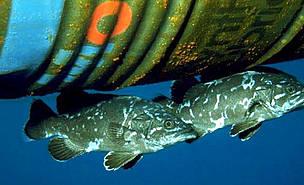 / ©: P. Guglielmi / WWF Mediterr anean