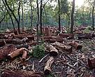 Замените на държавни гори не са напълно изключени като възможност