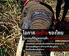 ประเทศไทยมีเวลาถึงเดือนมีนาคมปีหน้าในการวางมาตรการ จัดการและยุติปัญหาการค้าขายงาช้างผิดกฏหมาย มิเช่นนั้นจะต้องเผชิญกับการคว่ำบาตรทางการค้าจากนานาประเทศ