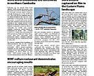 WWF Cambodia Newsletter, Apr-Jun 2009