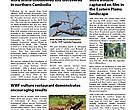 WWF Cambodia Newsletter, Apr-Jun 2009
