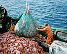 Industrial fisheries