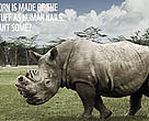 'Save a rhino, say no to rhino horn' ad
