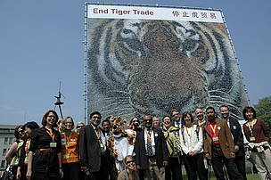 Members of the  International Tiger Coalition stand in front of the mosaic / &copy;: WWF/A. Christy Williams