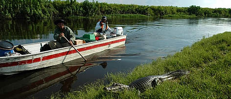 Navigating on one of Iténez Protected Area's rivers, Beni, Bolivia. A <i>Caiman crocodilus ... rel=