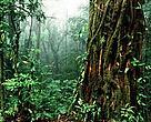 WWF Centroamerica