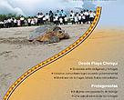 Playa Chiriquí - Conservación en consonancia con la tradición cultural
