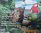 WWF Centroamérica - Revista Nº5