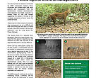 WWF Cambodia Newsletter, special edition